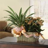 Bountiful Blooming Garden Basket by Cremation Funeral Flowers.com
